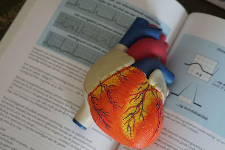 Promotes better heart health