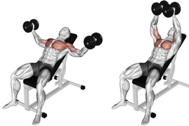Inclined Dumbbell Fly Chest Workout