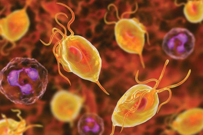 12 Symptoms Of Trichomoniasis That Help You Treat It Earlier